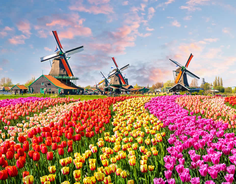 Cheap Removals to Netherlands